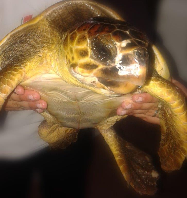 Siracusa salvate preziosi esemplari di tartaruga caretta for Contenitore per tartarughe