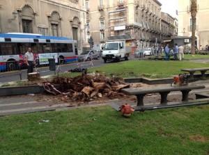 Palma-abbattuta-e-panchina-piazza-Cutelli1