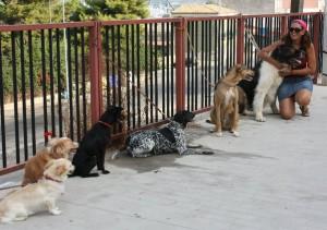 enzalicciardello con i suoi cani