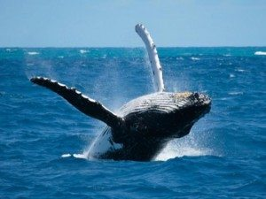 santuario-dei-cetacei