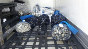 Attività volta al controllo della filiera della pesca - Sequestri, denunce e sanzioni amministrative