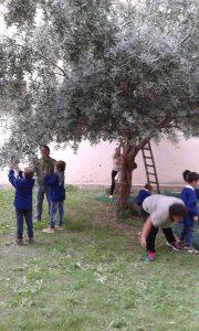 Scuola e olive